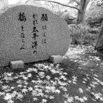 Touring the Nitobe Memorial Garden